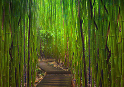 Bamboo Forest In Road