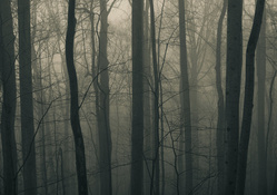 Fog In The Dark Forest