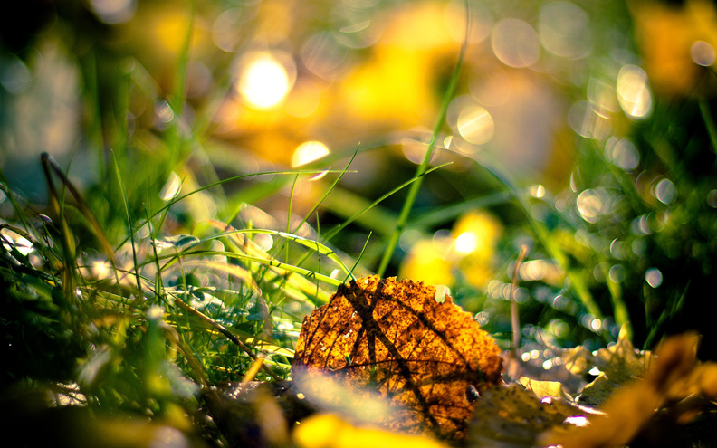 Autumn_Leaf_on_Grass.jpg