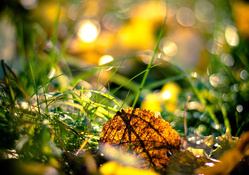 Autumn Leaf on Grass