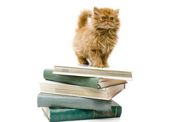Studious Cat With Books