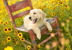 Puppy In A Chair