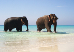 Elephants In Paradise