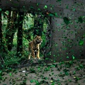 Nature And People