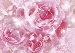 Roses Flowers  Widescreen
