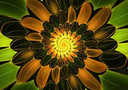 Spiral Petals Widescreen Wallpaper