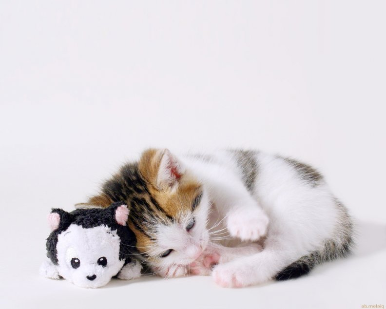 cute-cat-and-toy.jpg