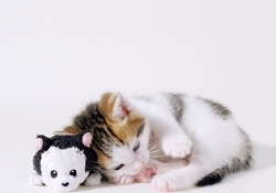 Cute Cat and Toy