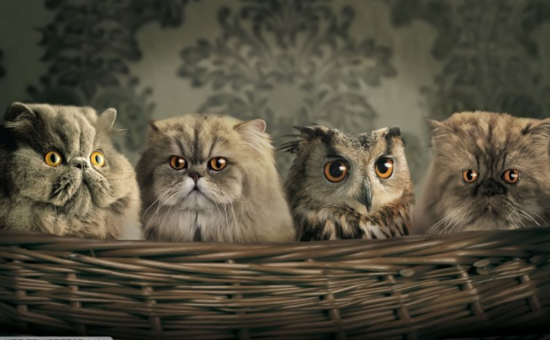 cats-and-owl.jpg