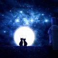 Kittens Romantic Night