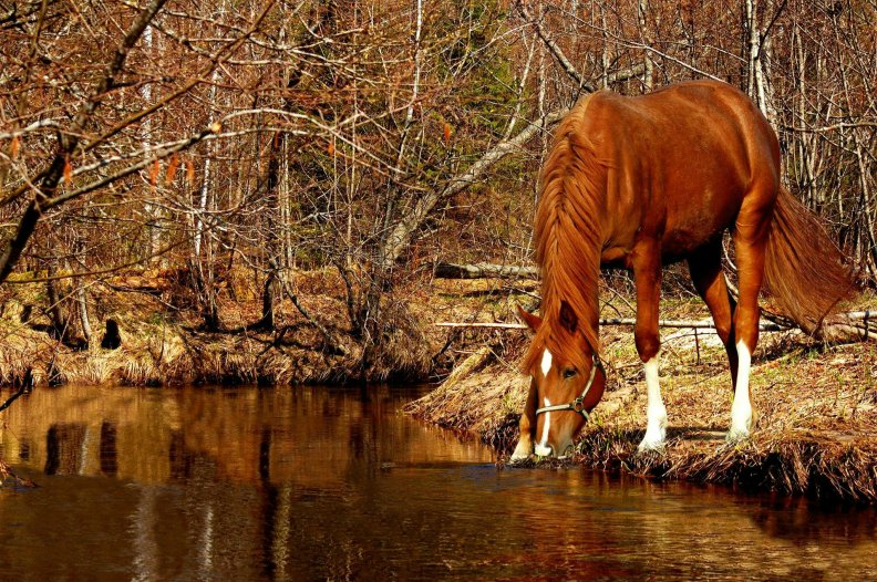 Autumn Horse Download Hd Wallpapers And Free Images