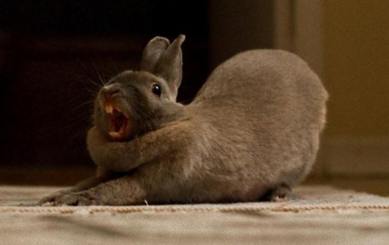 445 best Bunny images on Pinterest | Animals, Bunny rabbits and ...