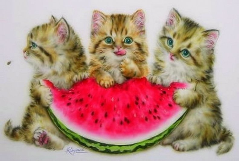 Cats eating watermelon