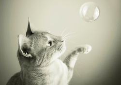Cat and bubble