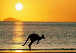 KANGAROO AT SUNSET