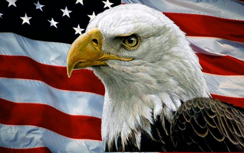 bald eagle and usa flag f download hd wallpapers and free