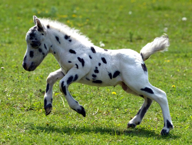 The cutest horse in the world