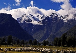 sheep grazing under majestic mountains