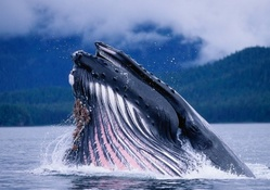 magnificent blue whale