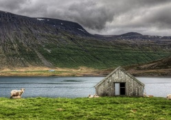 sheep grazing by a hut at a lake hdr