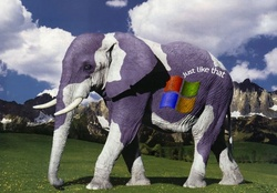 Windows Elephant