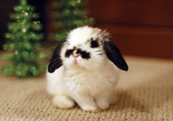 A bunny for Christmas!♥