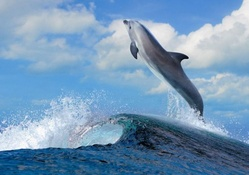 dolphin leaping over a sea wave
