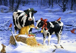 COWS FOR CHRISTMAS