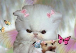 Kitten and Hammie Investigate Butterflies