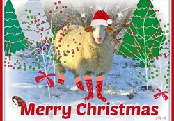 ♥ ***Christmas Sheep*** ♥