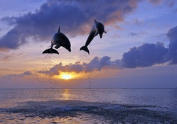 amazing flying dolphins