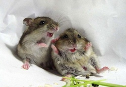 Happy Mice