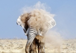 an elephant taking a dirt shower