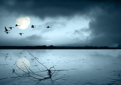 flight of swans over a moonlit lake
