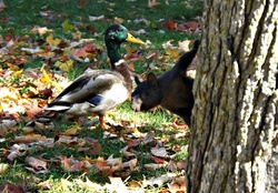 squirrel & duck