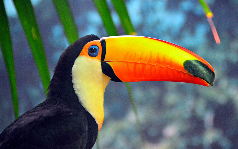 Animal Wallpaper Birds Wallpapers Download Hd Wallpapers And Free Images