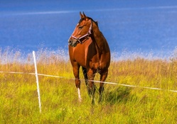 *** Horse on meadow ***