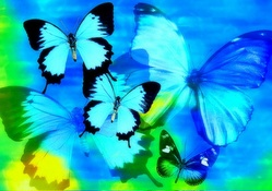 ✫Cool Colors Butterflies✫