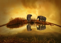 Animal Wallpaper Elephants Wallpapers Download HD And