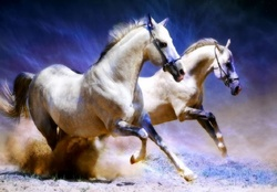 Animal Wallpaper Horses Wallpapers Download Hd Wallpapers And Free