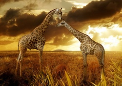 Animal Wallpaper Giraffes Wallpapers Download HD And