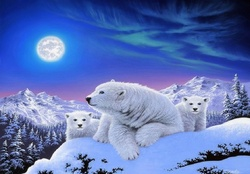 ✫Dreams of Polar Bears✫