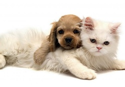 *** DOG AND CAT ***