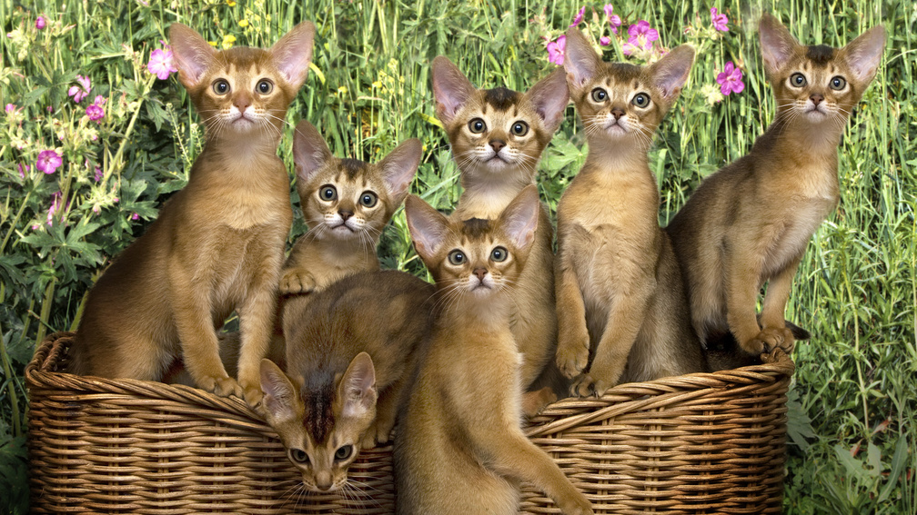Animal Wallpaper Cats Wallpapers Download Hd Wallpapers And Free Images