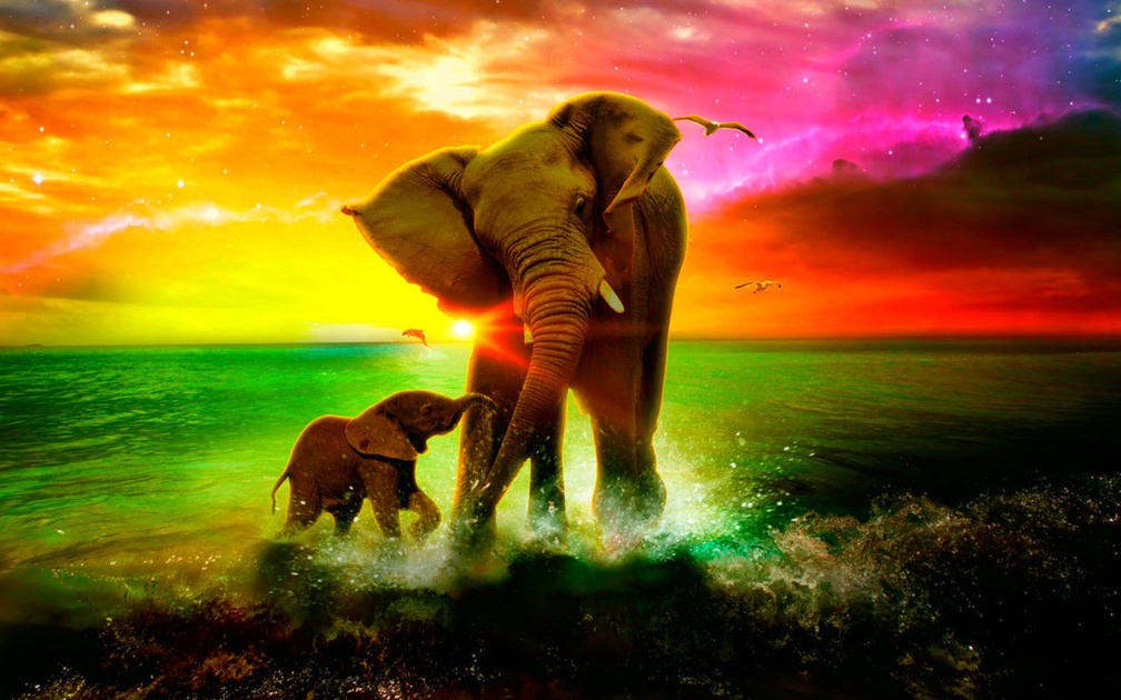 Animal Wallpaper Elephants Wallpapers Download Hd