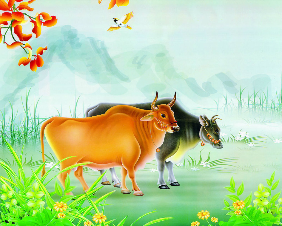 Animal Wallpaper Cows Wallpapers Download Hd Wallpapers And Free Images