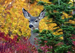 Autumn Deer