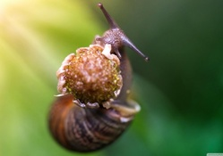 Snail eating a flower