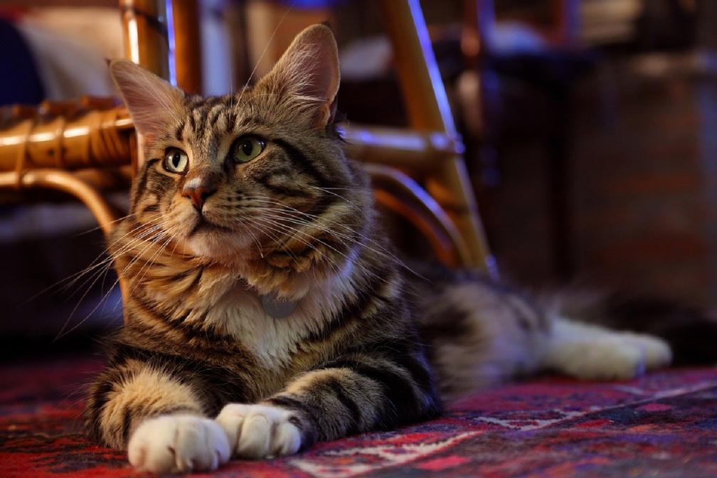 Animal Wallpaper Cats Wallpapers Download Hd Wallpapers