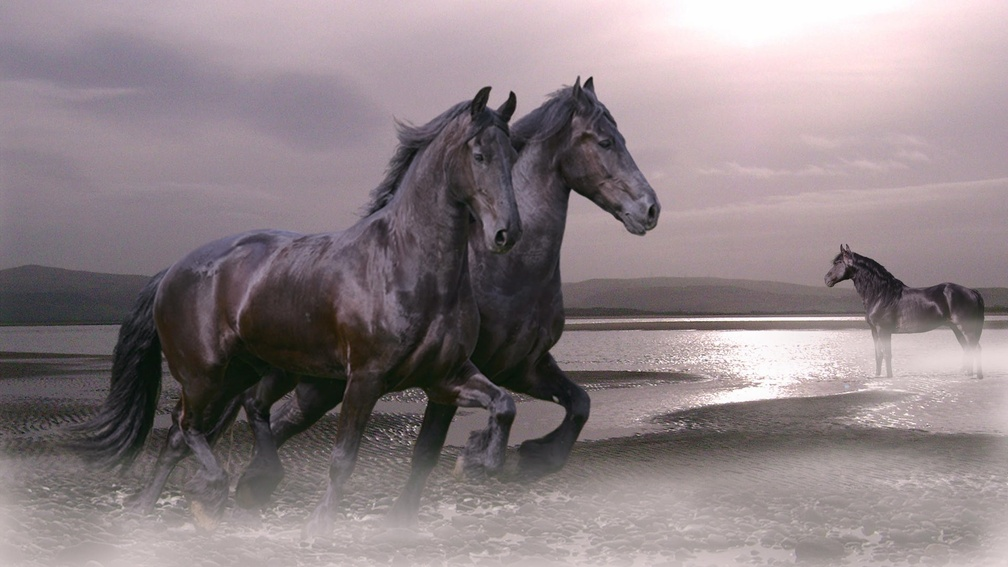 Animal Wallpaper Horses Wallpapers Download Hd Wallpapers And